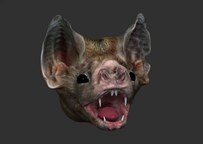 bat texture